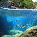 Tribloo - Réservez le meilleur de la plongée - spot de plongée