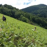 La fresque végétale géante AOP Ossau-Iraty à voir sur la Vuelta